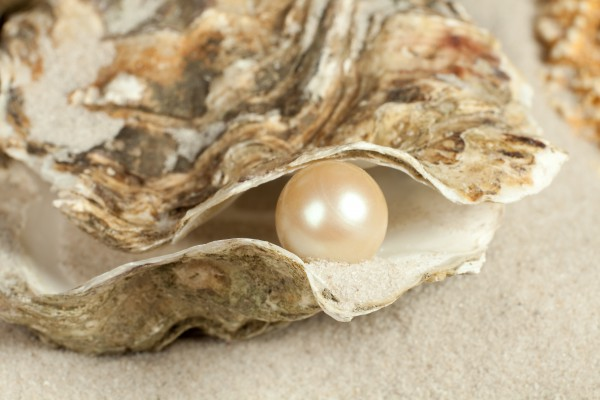 Oyster on a sandy beach with one large pearl in it